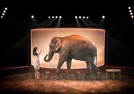 center parcs cirque alexis gruss elephante
