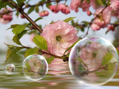 bulles roses