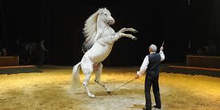 center parcs cirque alexis gruss cheval