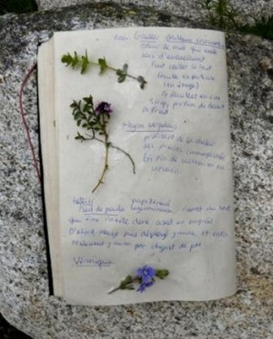 cahier plantes_jevouschouchoute