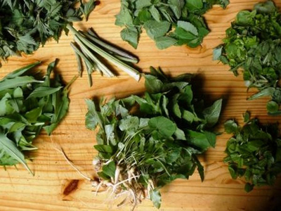 cueillette plantes_jevouschouchotue