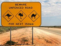 Australie JVC mortalité animale jevouschouchoute