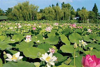 Parc floral et tropical de la Court d'Arons_jevouschouchoute_jvc
