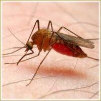 Parakito - moustiques