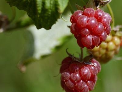 quercy_fruit_jevouschouchoute_jvc