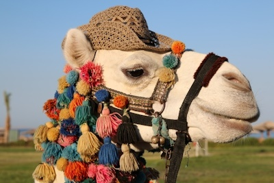 jevouschouchoute_jvc_carret_martine-egypte-dromadaire-camel