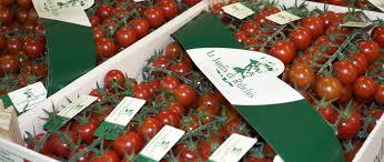 tomate3-rabelais-jevouschouchoute.fr