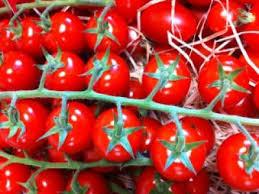 tomate8-rabelais-jevouschouchoute.fr