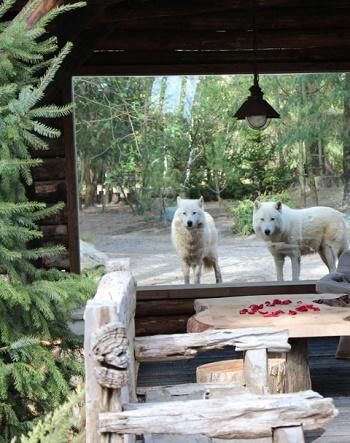 PAYSDLALOIRE-Lodge Zoo de la Flèche ©JM Béduneau_jevouschouchoute