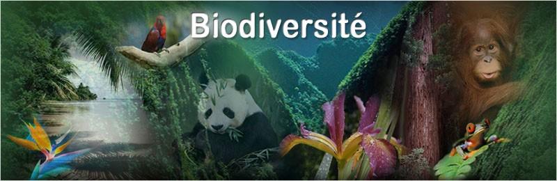 biodiversite JVC jevouschouchoute