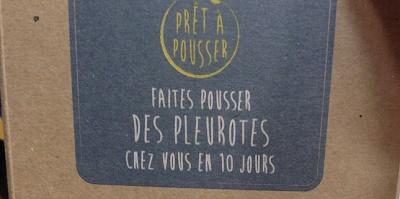 pretapousser0_pleurotes_jvc_jevouschouchoute (6)