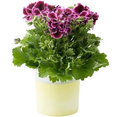 @Office Hollandais des Fleurs