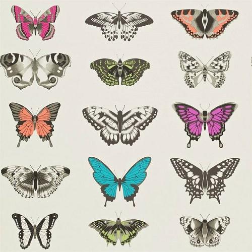 papillon-harlequin-papierpeint-jvc-jevouschouchoute1