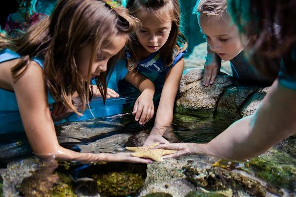 bassin tactile-sealife-jvc-jevouschouchoute