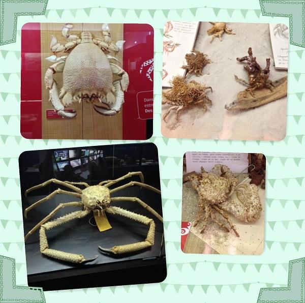 crabes2