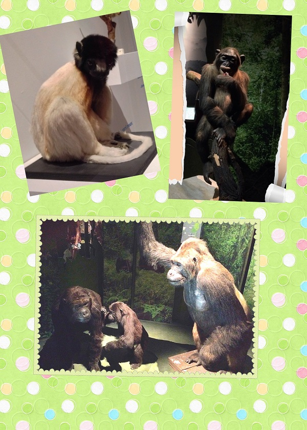 grands singes2