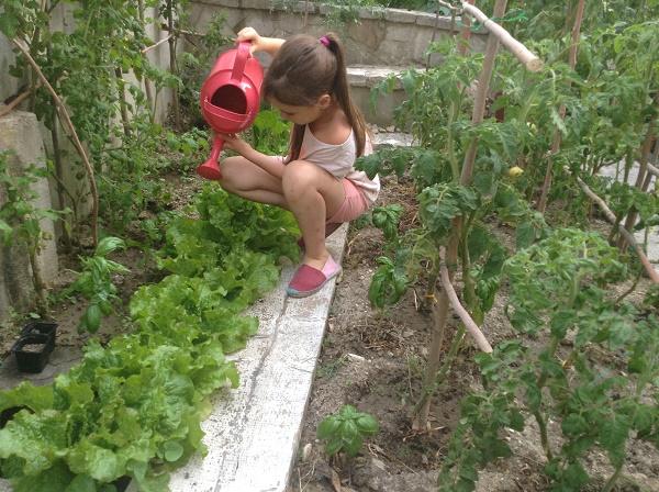 d'aucy jardinage