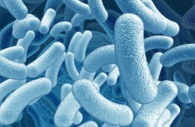 probiotiques-jevouschouchoute