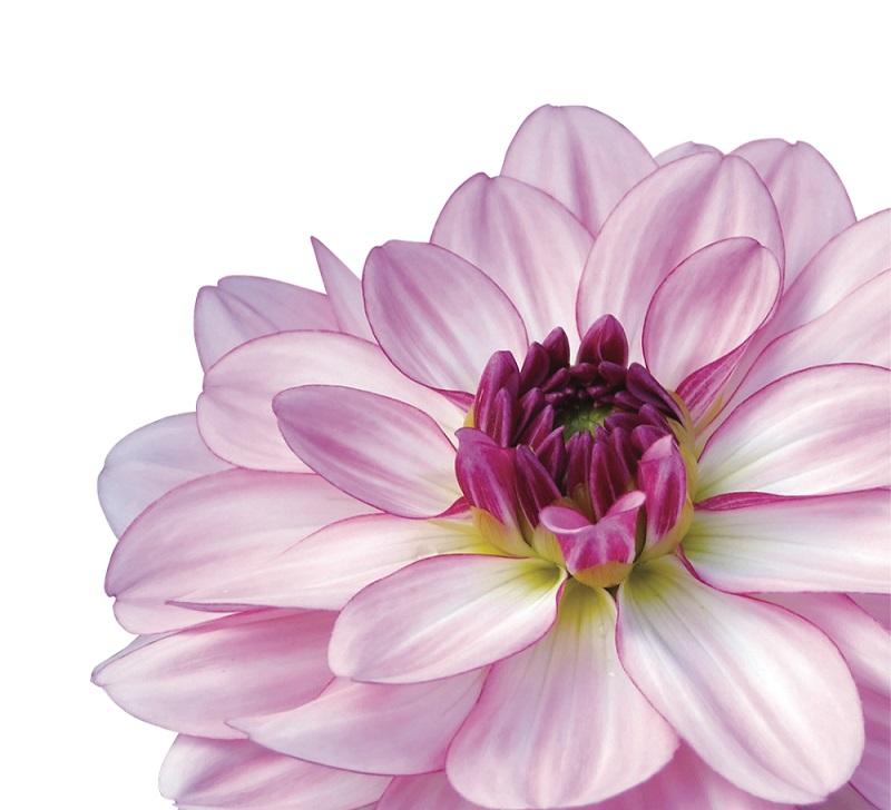 Nova Flore