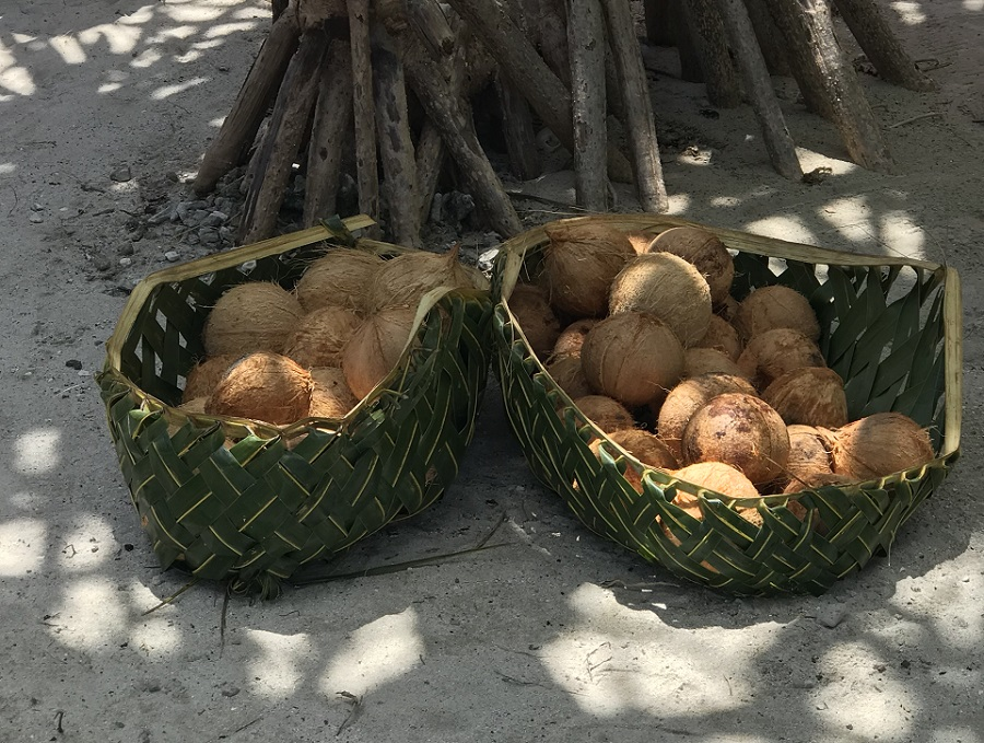 le rhinoceros du cocotier